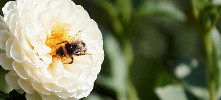 Miel. Sustituir el azúcar